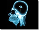 brain homer